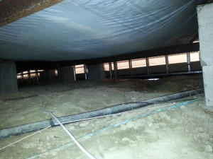 Chesterfield MI animal damage to insulation in crawlspace 1